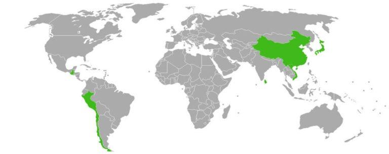 proveedores mundiales andes tea