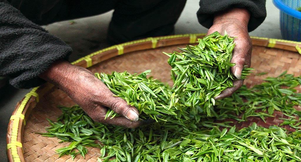 te verde andes tea